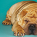 3avdzr0sbi0s3v8ygehv+pet_ownership_small