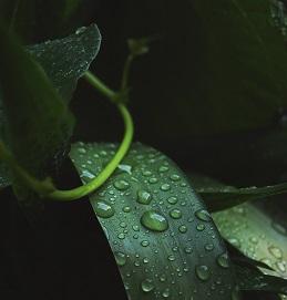 Raingarden article