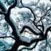 Hr5kzghnrro48jxuneez+winter_weather_small