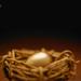Krgyzcwkrwwhhojh912h+nest_egg_small