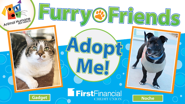 Furryfriends 011618 web